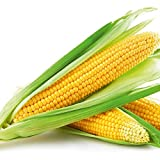 Gracefulvara 100PCS Vegetables Sweet Corn Seeds Home Garden Organic Yellow Corn Seeds Photo, best price $3.39 new 2019