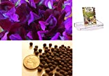 Homegrown Packet Sweet Pea Seeds, 75 Seeds, Scented Purples Sweet Pea Photo, best price $4.99 new 2018