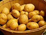 SEED POTATOES - 5 lb Yukon Gold * Organic Grown * Non GMO * Virus & Chemical Free * Ready for Spring Planting * Photo, best price $14.19 new 2018