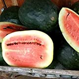 David's Garden Seeds Fruit Watermelon Black Diamond Yellow Belly KW6566 (Red) 50 Heirloom Seeds Photo, best price $9.45 new 2018