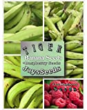Tiger Banana Tree Certified Banana Seeds UPC 600188190960 (155 Seeds Total) Free Raspberry Photo, best price $5.49 new 2018