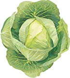 #1307 *MONSTER GIANT RUSSIAN CABBAGE* 150 SEEDS Photo, best price $2.50 new 2019