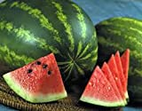 Watermelon, Jubilee Watermelon seed, Organic, NON-GMO, 25 seeds per package Photo, best price $1.89 new 2019