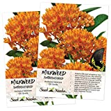 Seed Needs, Butterfly Milkweed/Monarch Flower (Asclepias tuberosa) 2 Packages of 100 Seeds Untreated Photo, best price $9.45 new 2019