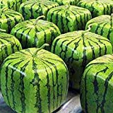 50pcs Watermelon Seeds, Crimson Sweet Square Watermelon Non-GMO Pant Seeds, for Garden DIY Planting Photo, best price $7.99 new 2018