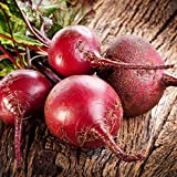 Bulls Blood Beet Seeds - 1 Lb - Non-GMO, Heirloom - Vegetable Garden, Microgreens Seeds Photo, best price $33.93 new 2018