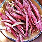 David's Garden Seeds Bean Dry Pinto SV139AC (Brown) 100 Non-GMO, Heirloom Seeds Photo, best price $7.95 new 2019
