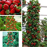 Red 300 pcs Strawberry Climbing Strawberry Fruit Plant Seeds Home Garden New Photo, best price $1.79 new 2019