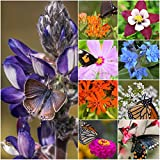 Package of 30,000 Seeds, Bird and Butterfly Wildflower Mixture (100% Pure Live Seed) Non-GMO Seeds by Seed Needs … Photo, best price $12.50 new 2019