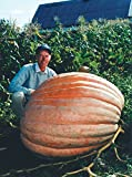Dill's Atlantic Giant Pumpkin Seeds ★ Monster Pumpkin!!! ★ Can Grow to 1600 lbs. Photo, best price $1.80 new 2020