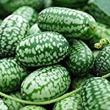 Mexican Miniature Watermelon 15 Seeds -Melothria scabra Photo, best price $1.40 new 2018