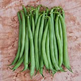 Strike Bush - Bean Seeds - Non-GMO - 2 ounces Photo, best price $5.49 new 2018