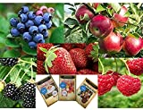 Fruit Combo Pack Raspberry, Blackberry, Blueberry, Strawberry, Apple (Organic) 975+ Seeds UPC 600188190625 & 3 Free Packs Flowers & Chamomile Photo, best price $7.99 new 2018
