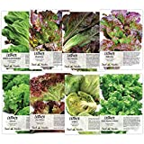 Lettuce Lovers Collection (8 Individual Packets of Lettuce Seeds) Non-GMO Seeds by Seed Needs Photo, best price $12.50 new 2018