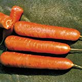 Park Seed Nantes Organic Carrot Seeds Photo, best price $4.95 new 2019