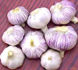 HOO PRODUCTS -100 Pcs / Bag Sterilization Vegetable Seeds Giant Garlic China Green Onion Tasty Leek Seeds Big Potted Onion Garden Bonsai Plant Hot Sale! Photo, best price $0.80 new 2018