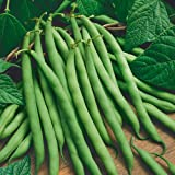 Jays Seeds Organic Bush Bean Provider 75 Seeds Photo, best price $5.52 new 2018