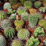 Outsidepride Succulent Cactus Plant Seed Mix - 1000 seeds Photo, best price $6.49 new 2019