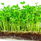 "Microgreen Organic Pea Shoot 3 Pack Refill–Pre-measured Soil + Seed, Use with Window Garden Multi-Use 15"" x 6"" Planter Tray. Easy and Convenient, Enough to Sprout 3 Crops of Superfood. Photo, best price $12.99 new 2018"