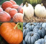 BIG PACK (80-90+) Dill Atlantic Giant, Casper White, Cinderella Rouge vif D'Espampes, Jarrahdale Blue Pumpkin Seeds - Non-GMO Seeds By MySeeds.Co (BIG PACK - Pumpkin Mix II) Photo, best price $14.95 new 2020