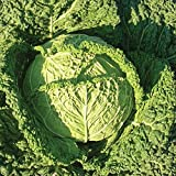 Famosa F1 Hybrid Cabbage Seeds - Flavor displays well fresh or cooked. !!!!(25 - Seeds) Photo, best price $2.42 new 2019