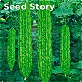 Hot Selling! Farm Seed 20 Pcs/bag Balsam Pear Seed Bitter Gourd Seeds Bitter Melon Semillas Momordica Charantia Diy Plant For Garden Bonsai seeds of hope Photo, best price $2.49 new 2019