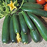 Kings Seeds - Courgette Zucchini - 20 Seeds Photo, best price $1.63 new 2020