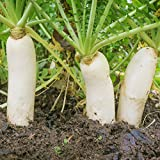 Outsidepride Daikon Radish Cover Crop Seed - 5 lbs Photo, best price $19.99 new 2019
