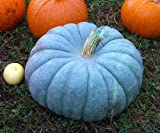 Pumpkin seeds Queensland Blue Ukraine Heirloom Vegetable Seeds Photo, best price $1.91 new 2019