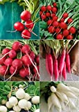 David's Garden Seeds Collection Set Radish RSL135 (Multi) 6 Varieties 2000 Plus Seeds (Open Pollinated, Heirloom, Organic) Photo, best price $17.95 new 2018