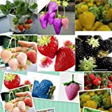 1500 seeds 15 Types of Strawberry Seeds Black, White, Yellow, Blue ,Red, Giant ,Orange,pruple,Green garden fruit plant Photo, best price $6.89 new 2018