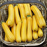 Park Seed Sunstripe Hybrid Squash Seeds Photo, best price $6.95 new 2018