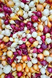 Onion Sets Red,Yellow,White or Mix (40-60 bulbs) Pick color, Garden Vegetable(Red) Photo, best price $3.49 new 2018