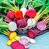 Rainbow Beet Blend Mixed Seeds - tasty, dynamic blend of beet seeds. !!!(25 - Seeds) Photo, best price $2.99 new 2018