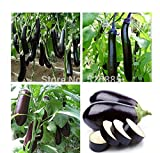 Eggplant Long Purple Italian Non-GMO Heirloom Vegetable 30 Seeds by Sow No GMO Photo, best price $2.99 new 2019