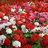 Outsidepride Geranium Flower Seed Plant Mix - 100 Seeds Photo, best price $6.49 new 2020