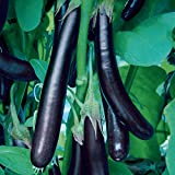 Burpee Long Purple Eggplant Seeds 35 seeds Photo, best price $6.89 new 2019