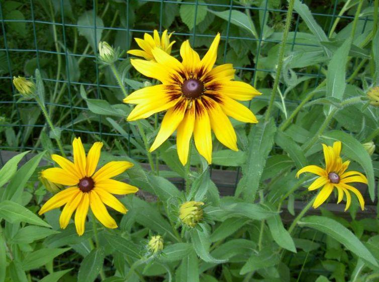 Photo fleur couverture jaune for Couverture plante hiver
