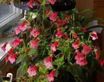 Photo Tree Gloxinia, red herbaceous plant