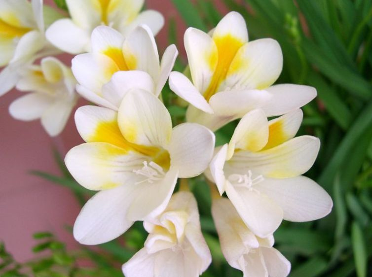doftande blommor inomhus